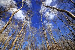 Arbres nus d'une forêt d'automne Image stock