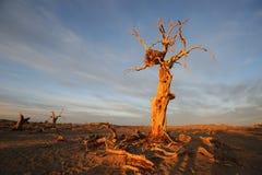 Arbres nus dans l'aube d'automne Photo stock