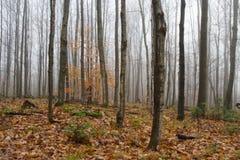 Arbres nus dans la forêt brumeuse II d'automne Images stock