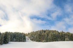 Arbres nus de l'hiver Image libre de droits