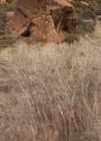 Arbres nus de peuplier d'hiver et grand rocher rouge Images stock