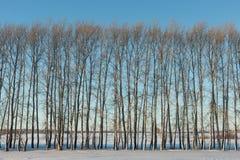 Arbres nus en hiver Photos libres de droits