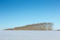Arbres nus en hiver Photos stock