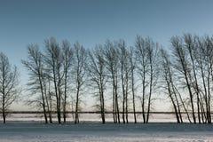Arbres nus en hiver Photo stock