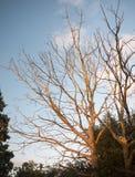 Arbres nus ensoleillés réglés du soleil renversant en été Images libres de droits