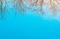 Arbres nus et fond de ciel bleu photo des arbres nus au printemps ou de l'hiver catastrophe écologique, pluies acides le début du Photographie stock libre de droits