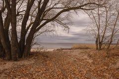 Arbres nus par la rivière en automne photos libres de droits