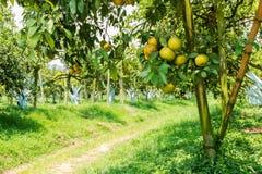 Arbres oranges Images stock