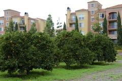Arbres oranges et appartements Image libre de droits
