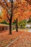 Arbres oranges et jaunes vibrants en automne avec la terre couverte dans des feuilles dans le nieghborhood classieux images stock