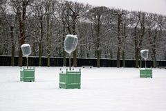 Arbres oranges sous le voile de l'hivernage Photos libres de droits
