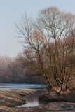 arbres outre de la côte Photographie stock libre de droits