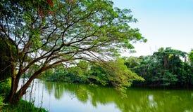 Arbres par la rivière Image libre de droits