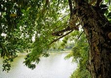 Arbres par la rivière Photo libre de droits
