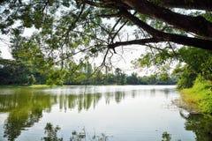 Arbres par la rivière Photographie stock