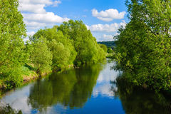 Arbres par la rivière Image stock