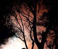 Arbres par la silhouette et les feux d'artifice Photo libre de droits