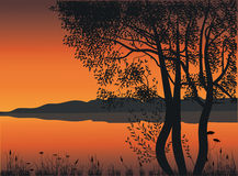 Arbres par le lac Photos libres de droits