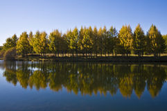Arbres par un lac Photographie stock