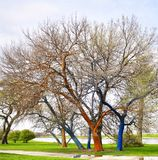 Arbres peints en Lincoln Park photos stock