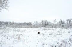 Arbres pendant l'hiver de neige contre le ciel Images libres de droits