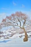 Arbres pendant l'hiver Roumanie Image stock
