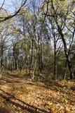 arbres pendant la saison d'automne image stock