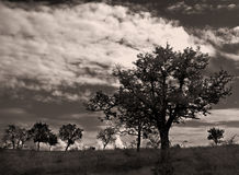 Arbres perdus? 2 photos stock