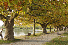 Arbres plats dans le feuillage d'automne, Radolfzell photos stock
