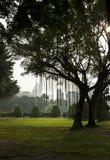 Arbres pleurants en parc asiatique Image libre de droits