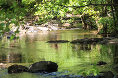 Arbres pliés au-dessus de rivière de montagne Image stock