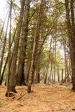 Arbres pour la forêt Photographie stock
