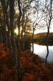 Arbres près de rivage d'étang Image stock