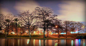 Arbres près du côté de lac au cours de la nuit Image libre de droits