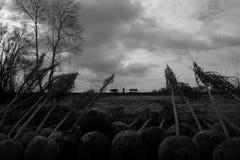 Arbres prêts pour la plantation photos stock