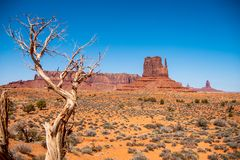 Arbres putréfiés secs à la vallée de monument en Utah photo stock