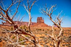 Arbres putréfiés secs à la vallée de monument en Utah photographie stock libre de droits