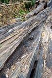 Arbres putréfiés tombés en hiver dans la vallée supérieure de Swansea Photos stock