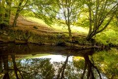 Arbres réfléchis sur la rivière Photos libres de droits