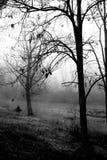 Arbres, rivière et brume Image libre de droits