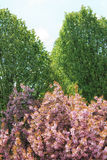 Arbres roses et verts Images stock