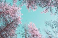 Arbres roses sous un ciel bleu image libre de droits