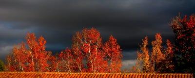 Arbres rouges d'automne avec le ciel noir Photographie stock libre de droits