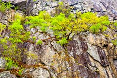 Arbres s'élevant hors des falaises rocheuses, Norvège Photos libres de droits