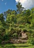 Arbres s'élevant sur une roche et en canyons Photographie stock libre de droits