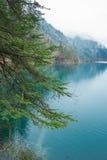 Arbres sans compter que le lac photographie stock