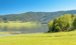 Arbres sans compter que le lac photo libre de droits