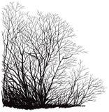 Dessin au crayon d 39 arbre nu en hiver illustration stock - Dessin arbre nu ...