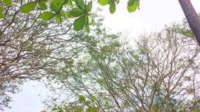 Arbres sans feuilles avec le ciel propre à l'arrière-plan au printemps image stock