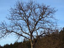Arbres sans feuilles Prévision de temps froid images stock
